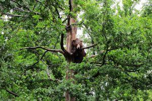 animals trees bears nature