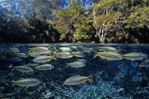 animals water underwater fish nature