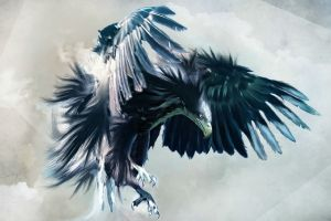 artwork hawks animals birds