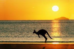 australia sun beach kangaroos animals sky