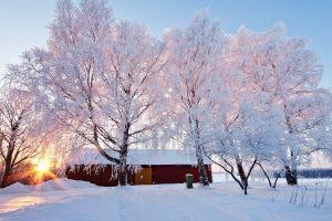 barn trees snow nature winter