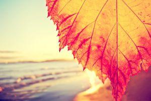 beach depth of field leaves