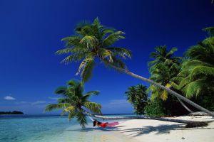 beach palm trees nature tropical