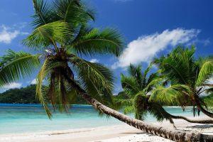 beach palm trees tropical nature sea clouds