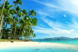 beach palm trees tropical