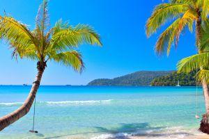 beach sea tropical palm trees