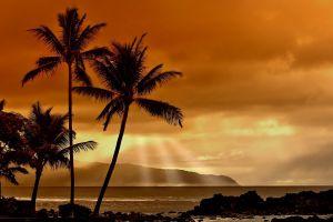beach sunlight landscape clouds nature sea sunset palm trees