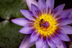 bees plants flowers nature insect