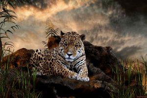 big cats animals jaguars