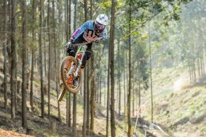 biker trees sport  jumping