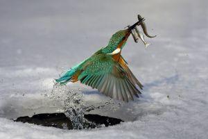 birds animals fish ice