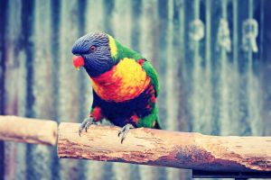 birds colorful animals