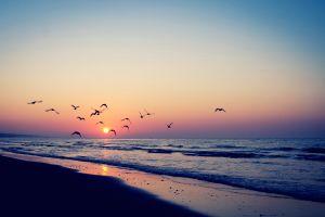 birds horizon sea summer sun beach sky