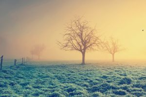 birds landscape sunlight winter nature mist filter fence trees grass