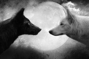black wolf artwork moon white monochrome