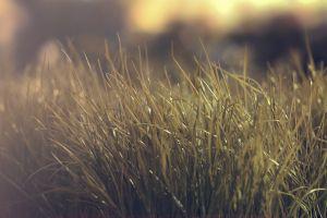 blurred landscape grass