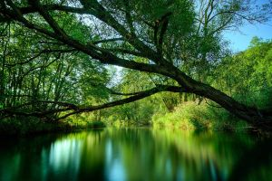 blurred plants water river nature landscape forest trees green