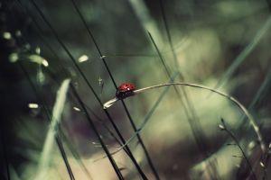 bokeh animals insect ladybugs grass
