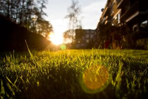bokeh depth of field grass photography sunlight plants lens flare nature closeup sunset
