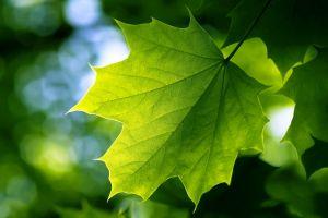 bokeh nature green leaves
