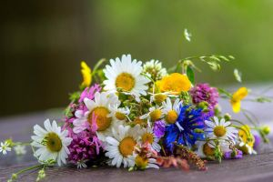 bouquets daisies flowers