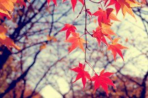 branch bokeh leaves fall nature