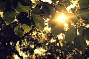 branch sunlight plants leaves