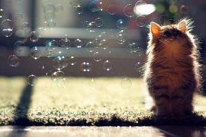 bubbles sunlight cats animals looking up ben torode