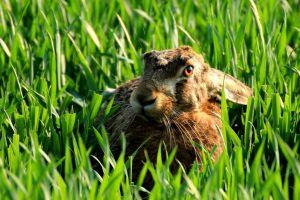 bunny ears animals rabbits