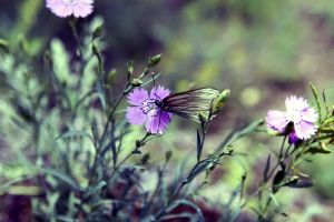 butterfly insect nature purple flowers flowers depth of field