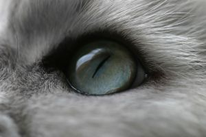 cats animals eyes