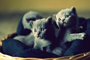 cats animals kittens baby animals