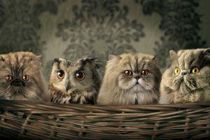 cats baskets humor owl animals
