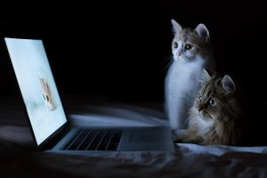 cats feline laptop