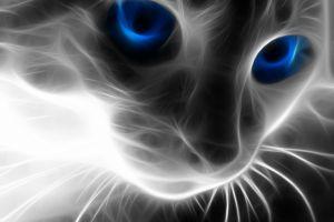 cats fractalius animals blue eyes