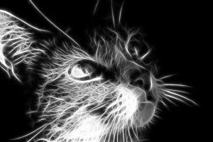 cats fractalius animals digital art monochrome