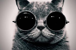 cats glasses monochrome sunglasses animals