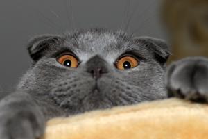 cats pet eyes humor animals