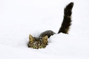 cats simple pet snow animals green eyes white background white