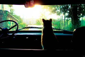 cats sun car