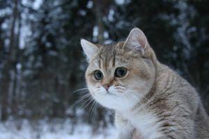 cats winter animals