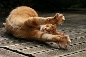 cats wooden surface animals stretching