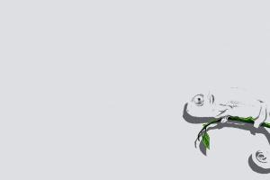 chameleons animals minimalism