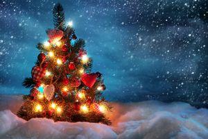 christmas trees fir christmas tree