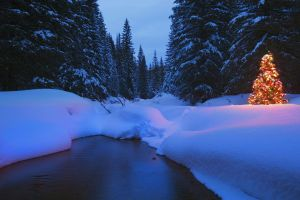 christmas winter trees nature night river landscape snow