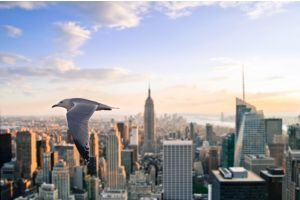 city new york city nature lights flying animals sky birds futuristic