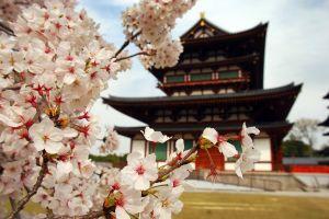closeup asia cherry blossom japan building plants flowers asian architecture