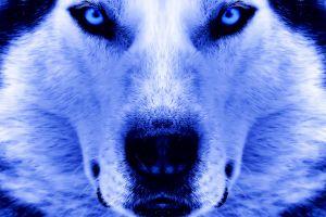 closeup dog animals
