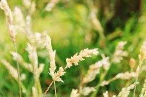 closeup grass plants nature