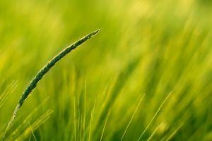 closeup nature plants